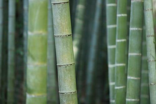 Seluk Beluk Beserta Kelebihan Katun Bambu