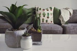 contoh sarung bantal pattern pada ruangan minimalis yang di sesuaikan dengan tanaman